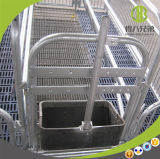 Аграрное оборудование для клетей свиньи высоких гальванизированных Strengh порося