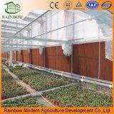 최신 판매 기후 통제 시스템 농업 유리제 Venlo 온실