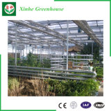 Agriculture/Chambres vertes en verre Multi-Envergure de jardin pour le fruit/fleur