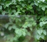certificado CE alta transmitancia de luz clara gabinetes para baño de vidrio esmerilado