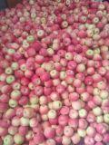 Galà Apple/Apple rosso della Cina Fesh