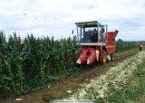 motore diesel di cavalli vapore 120HP e 130HP per il Reaper del cereale