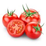 새로운 작물 신선한 토마토 최신 판매 고품질 토마토 빨강 토마토