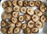 Las conservas de todo el hongo Shiitake en salmuera