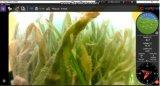 Piscicultura subaquático Rov