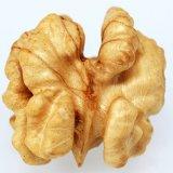 Nocciolo Nuts naturale organico della noce della frutta secca ambra-chiaro della nuova del raccolto farfalla Premium superiore di Inshell intero
