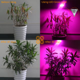 Indicatore luminoso di vendita caldo del LED per i fiori