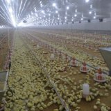 Granja de pollos moderna llave en mano de la casa de aves de corral de la fábrica