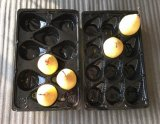 Hot Sale monde plateau jetable en plastique PP populaire pour les fruits