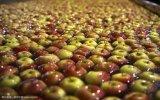 2017 Nouveaux Fruits Rouges pommes Fuji