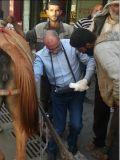 Vet ультразвукового аппарата/портативных ультразвуковых для крупного рогатого скота и лошадей Handscanv8