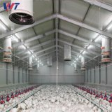 Estructura de acero prefabricados prefabricados SGS arrojar granja de pollos de aves de corral con bajo coste