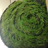 Prezzo più poco costoso di alta qualità dello SGS che modific il terrenoare l'erba artificiale di cerimonia nuziale