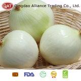 Hochwertige abgezogene weiße Zwiebel