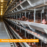 Клетка батареи слоя цыпленка 4 ярусов для птицефермы Танзании