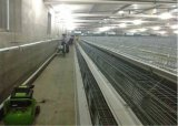 Hete de Apparatuur van de Kooien van het Landbouwbedrijf van de jonge kip/Ondergedompeld Koud Gegalvaniseerd (een Frame van het Type)
