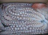 Reuze Octopus