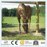Rete fissa tessuta della rete metallica e rete fissa del cavallo