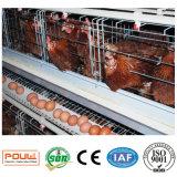 Galinhas da camada da exploração avícola da gaiola da galinha