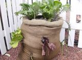 Alle verschiedenen Arten DIY Garten Beutel pflanzend