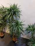 Piante e fiori artificiali delle piante Gu-Jy901130926 della parentesi