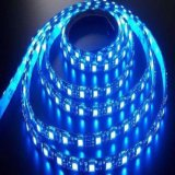 Striscia flessibile blu impermeabile di IP65 IP68 SMD 5050 24V LED