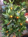 El mejor venta de plantas artificiales de Orange Tree Gu1525423183146