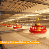 Nouveau design hot sale de la volaille pour la couche de matériel agricole poulette