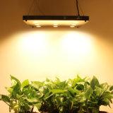 Ningún ventilador Blacksun LED crece ligero con alta calidad