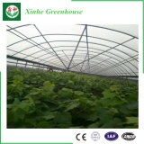 Vegatable/꽃 과일을%s 다중 경간 플레스틱 필름 온실