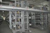 Type Breeding galvanisé cage des machines H de ferme de poulet de couche