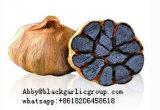 Les aliments nutritifs ensemble de l'ail noir