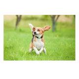 ペットか犬または猫または牛追跡するための防水小型の小型GPSの追跡者