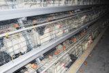 جديدة آليّة طبقة دجاجة قفص تجهيز (إطار)