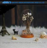 De Stolp van de Glazen kap van de Koepel van het glas Met de Voorgestelde Houten Basis van de Okkernoot