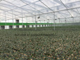 Leichter galvanisierter vorfabriziertbaustahl-Rahmen für grünes Haus