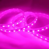 Led haute luminosité 120 bandes LED souples