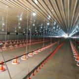 Strumentazione automatica dell'azienda agricola di pollo con il sistema d'alimentazione di allevamento