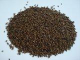 Miglioramento della cassia Obtusifolia L., estratto di Cassiae del seme, estratto di vista del seme della senna di Obtuseleaf