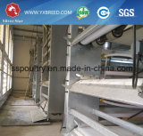 Nagelneuer galvanisierter Schicht-Huhn-Rahmen-Entwurf