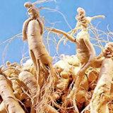 100%の自然な朝鮮人参のルートエキスGinsenosides