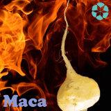 Het Uittreksel van Maca/het Uittreksel van Lepidium Meyeni