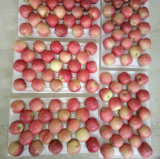 Vers plastic-In zakken gedaan Roze Dame Apple