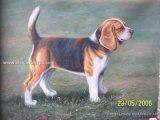 L'huile Painting-Dog(20*24pouces)