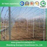 공장 가격 직류 전기를 통한 강철 프레임 농업 플라스틱 녹색 집