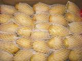 Картошка Shandong нового урожая свежая