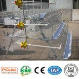 Une cage de bande de caisse Meilleur hêtre de poulet Quilt Ferme de volaille Équipement automatique Bétail