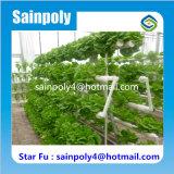 販売のための最もよい野菜栽培のHydroponic温室