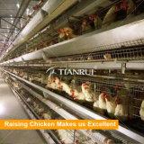자동적인 놓는 닭 가금 장비