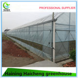 다중 경간 딸기를 위한 Hydroponic 필름 녹색 집